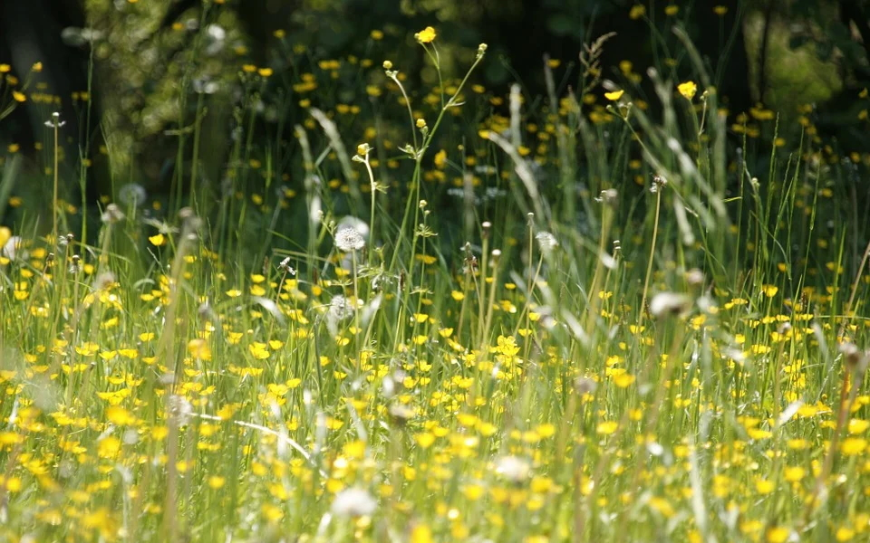 Pollenschutzgitter